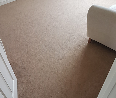 Before dry carpet cleaning