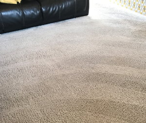 Carpet after dry carpet cleaning